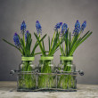 Hyacinth Still Life — Stock Photo