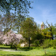 Magnolia Trees in Spring — Stock Photo