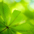 Fresh green Leaves — Stock Photo