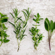 Assorted fresh Herbs — Stock Photo