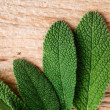 Fresh Sage — Stock Photo