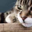 House Cat — Stockfoto