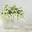 Snowdrop Flowers — Stockfoto