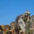 Seagulls on Cliff — Stockfoto