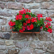 Flower Decoration — Stockfoto