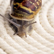 Curious Snail — Stock Photo