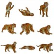 Stock Photo: Set of tiger poses