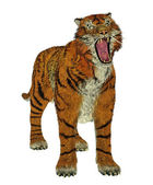 Tigre bullying — Foto Stock