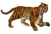 Tiger raging — Stock Photo