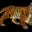 Tiger raging — Stock Photo