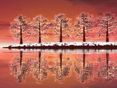 Winter trees by sunset — Stock Photo