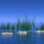 Peaceful nature scene — Stock Photo