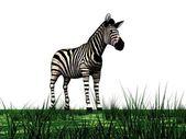 Zebra and grass — Stock Photo