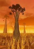 Baobabs by sunset — Stock Photo