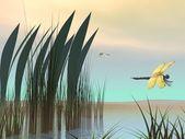 Dragonflies upon pond — Stock Photo