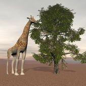 Big giraffe — Stock Photo
