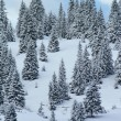 Fir tree in winter, Jura mountain, Switzerland — Stock Photo