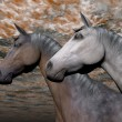 Stock Photo: Portrait of two horses - 3D render