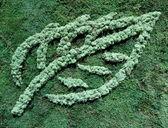 Biogas leaf symbol — Stock Photo