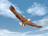 Eagle flying - 3D render — Stock Photo