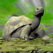 Galapagos tortoise looking at you - 3D render — Stock Photo