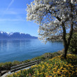 Springtime at Geneva lake, Montreux, Switzerland — Stock Photo #24314245
