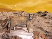 Cougar in the mountain - 3D render — Stock Photo