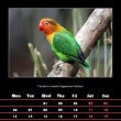 Stock Photo: Bird calendar for 2014 - october