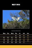Bird calendar for 2014 - may — Stock Photo