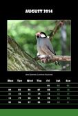 Bird calendar for 2014 - august — Stock Photo