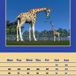 Safari calendar for 2014 - february — Stock Photo