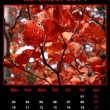 Nature calendar for 2014 - november — Stock Photo