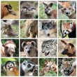 Animal mammals collage — Stockfoto
