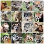 Animal mammals collage — Stock Photo #30563867