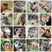Animal mammals collage — Stock Photo