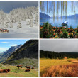 Stock Photo: Four seasons collage
