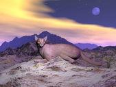 Caracal eller öken lynx - 3d render — Stockfoto