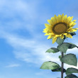 Stock Photo: Sunflower and sky - 3D render