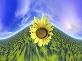 Ayçiçeği ve gök - 3d render — Stok fotoğraf