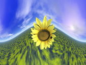 Sunflower and sky - 3D render — Stock Photo