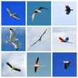 Set of flying birds — Stock Photo