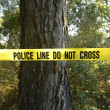 Crime scene in the forest — Stock Photo