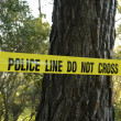 Stock Photo: Crime scene in forest