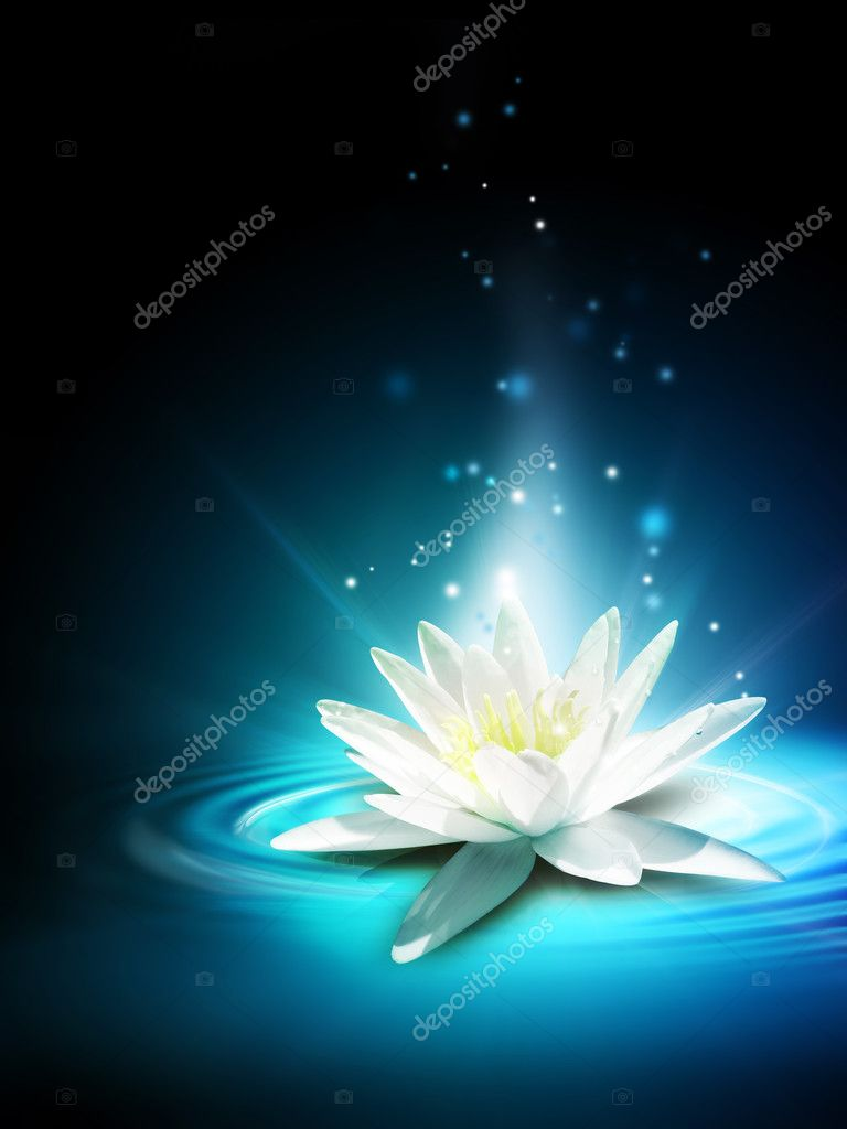 Magic lily flower on the water surface — Stock Photo #13554851