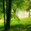 Summer forest — Stock Photo #31427271