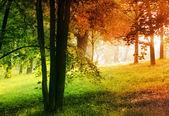 Autumn and summer — Stock Photo