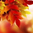 Autumn background — Stock Photo #32536397