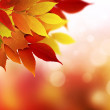 Autumn background — Stock Photo #32536409