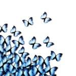 Butterflies — Stock Photo #5113648