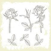 Rose retro set — Stock Vector